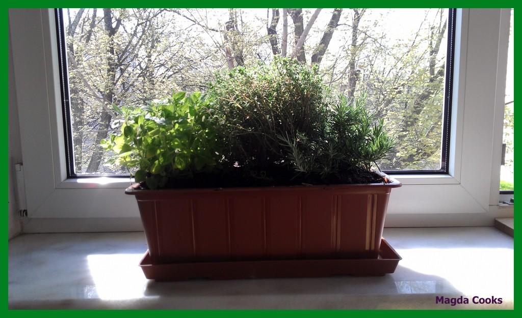 81 herb garden
